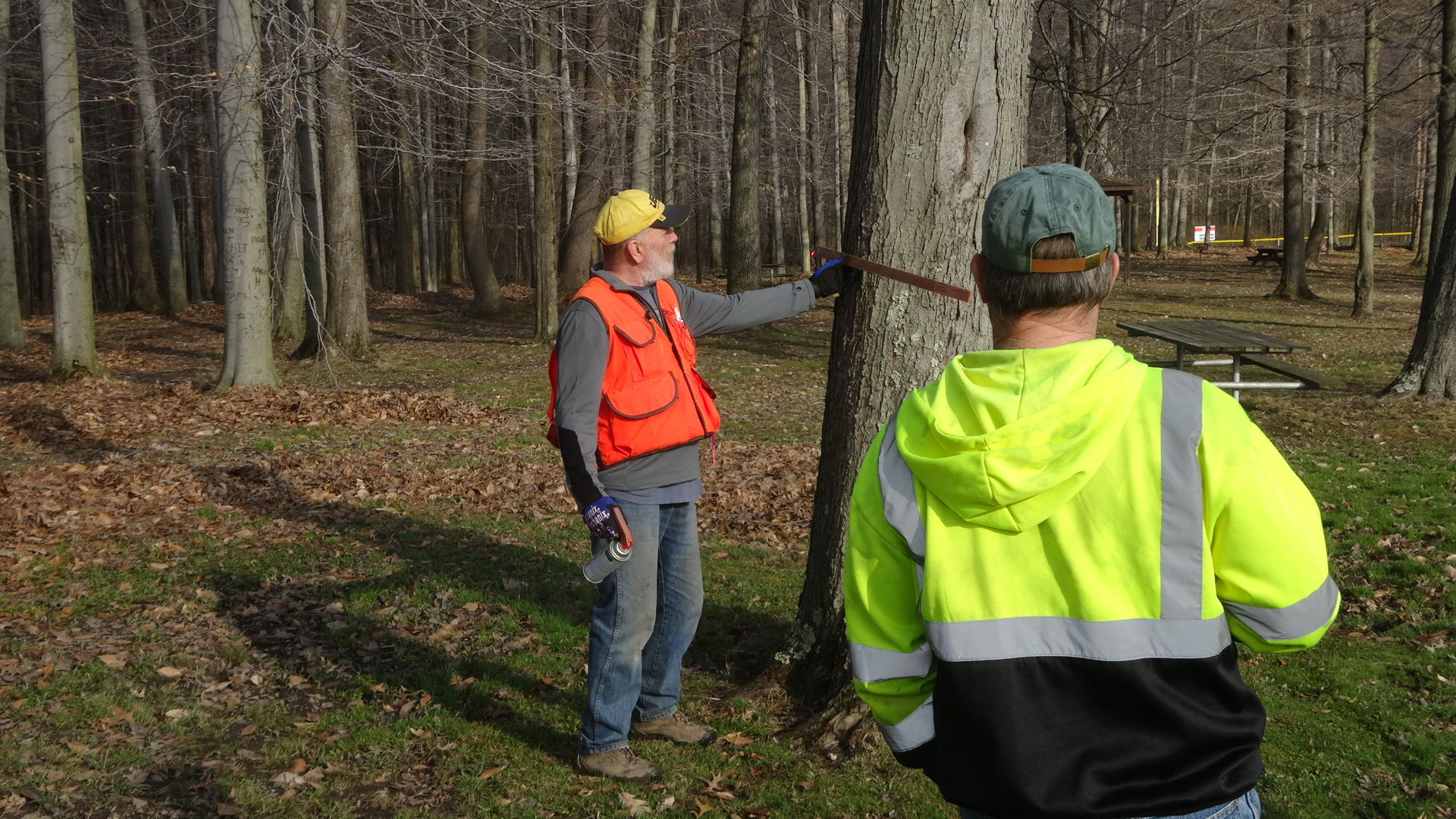 Forester Mark Popichak measures a tree during a risk assessment at Brookfield Township Community Park. Township Road Superintendent Jaime Fredenburg watches.