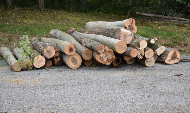 Park closed for logging