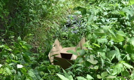 Township awarded grant for litter cleanups