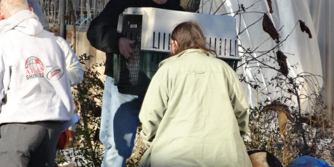 Animal case transferred to Cortland