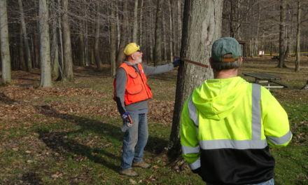 Township seeks bids for logging project in park