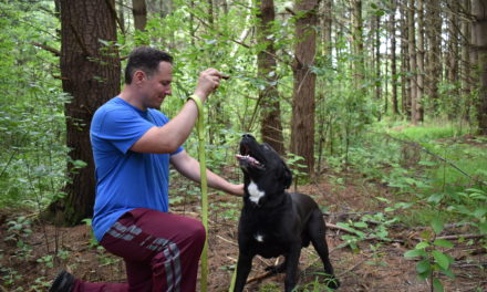 Healthy Hearts gives dogs a 2nd chance